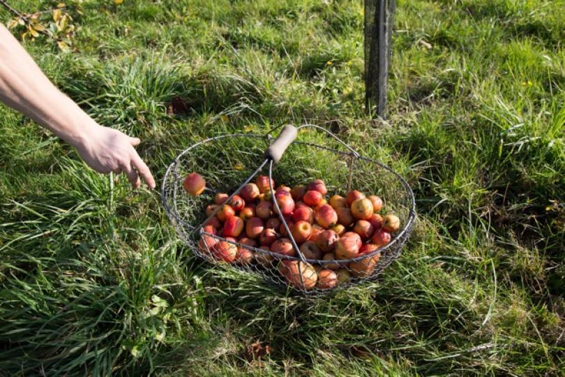 Pommes cidre Lemasson