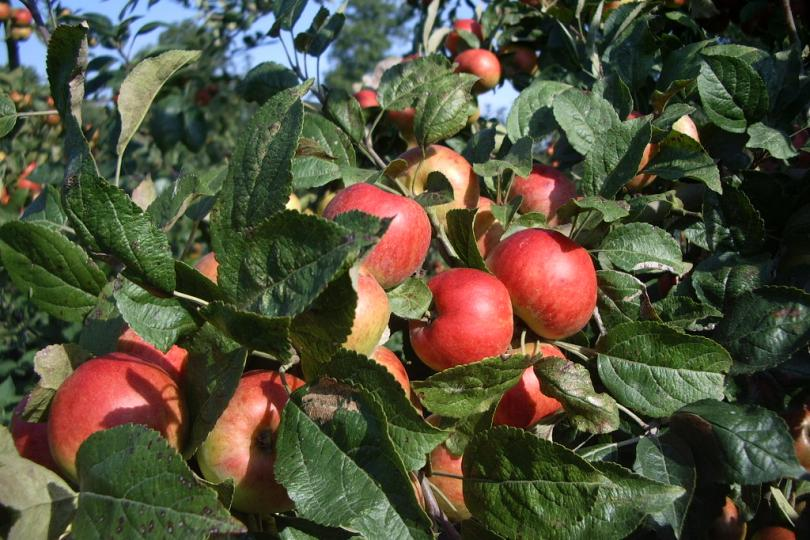 Pommes Cidre Pasquier