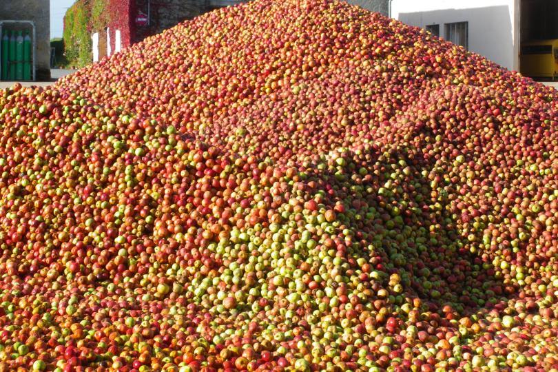 Pommes Viard