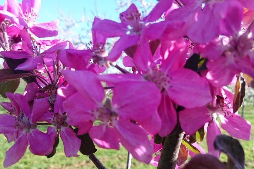 fleur vergers Manoir du Val
