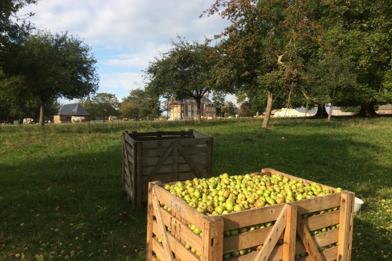 Pommes domaine SICERA