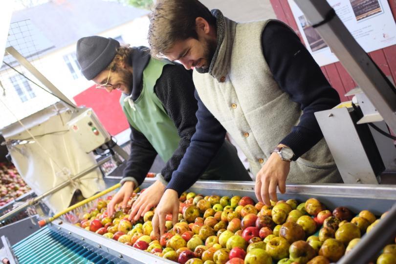 Tri pommes